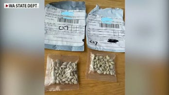 Mysterious seed packets arrive in US from China