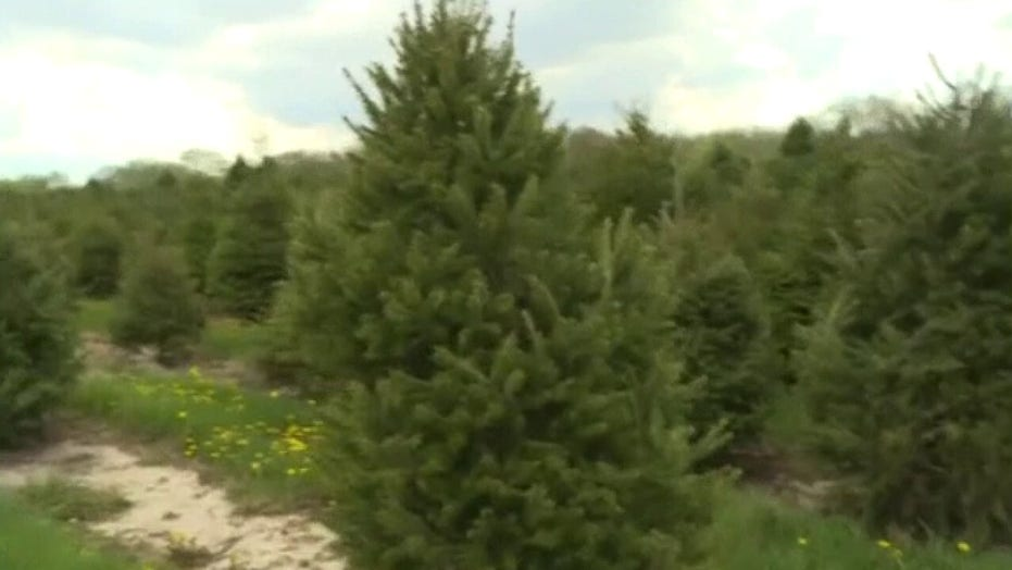 20% Americans have reportedly gotten hurt while setting up Christmas trees in 2020: Survey