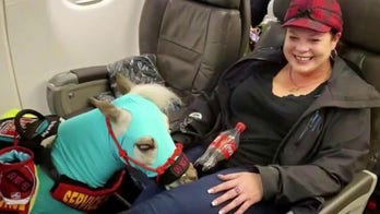 Emotional support animals will no longer be considered service animals on flights