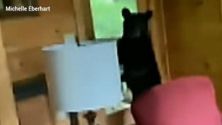 Bear surprises Tennessee vacationers, breaks into cabin and steals pounds of food