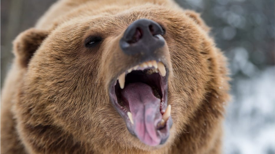 Photos show woman getting dangerously close to grizzly ...