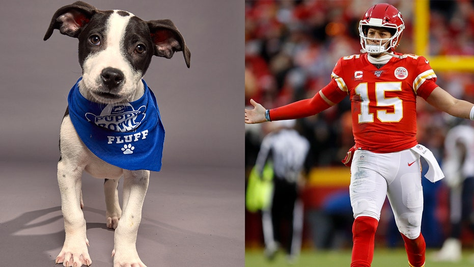 Puppy Bowl 2021 winner recap: Underdogs of Team Ruff were very good boys