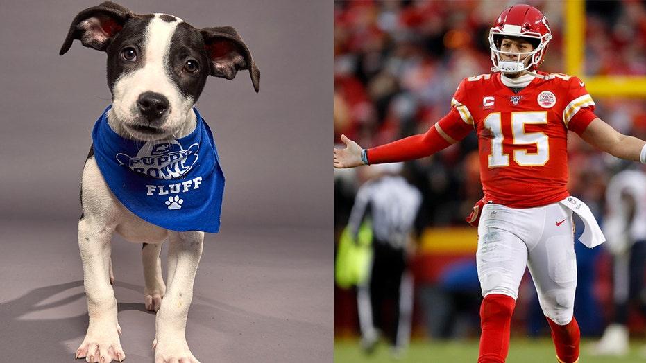 Puppy Bowl 2021 winner recap: Underdogs of Team Ruff were very good boys