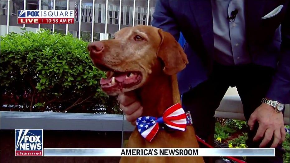 Dana Perino announces 'America's Dog' Jasper has died