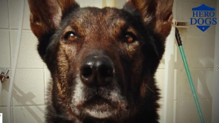 Fox Nation's 'Hero Dogs' features 'Cairo'