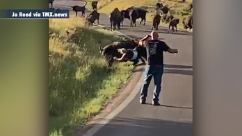 Bison attacks woman after she reportedly got too close to its calf