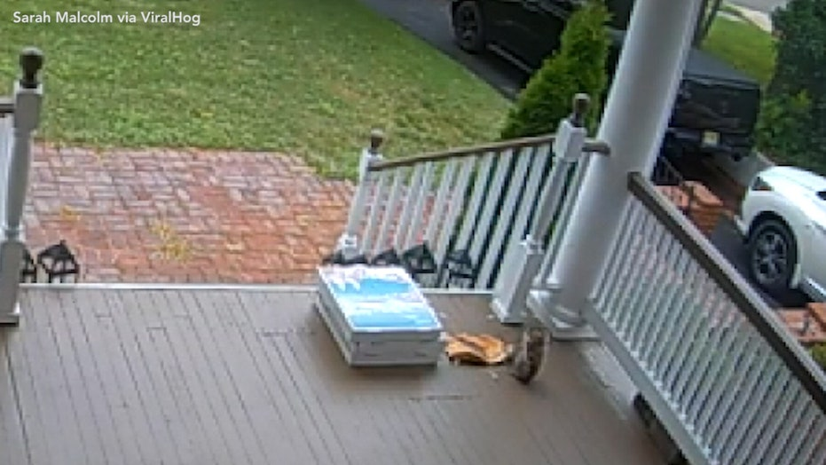 New Jersey squirrel caught stealing pizza after contactless delivery