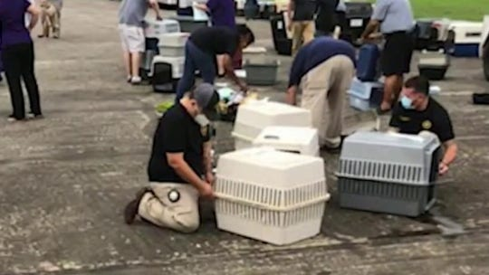 Animal rescue saves over 130 pets from path of Hurricane Laura