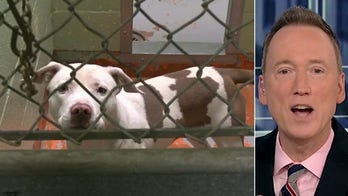 Tom Shillue discusses Denver's pit bull feud and robocalls
