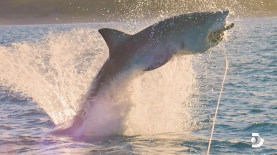 Shark Week to explore effect of COVID-19 on seas