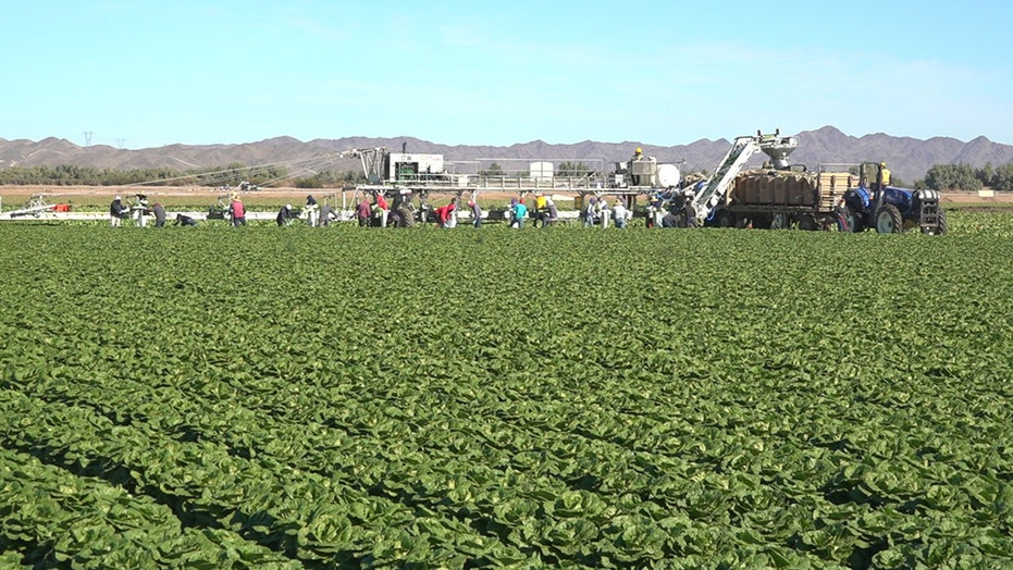 Coronavirus pandemic impacts lettuce industry as farmworkers brace for busy season