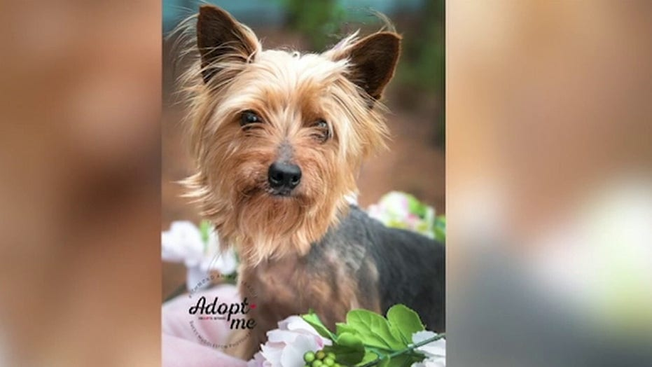 Richmond photographer helps save shelter pets amid pandemic