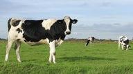 Milk prices rising