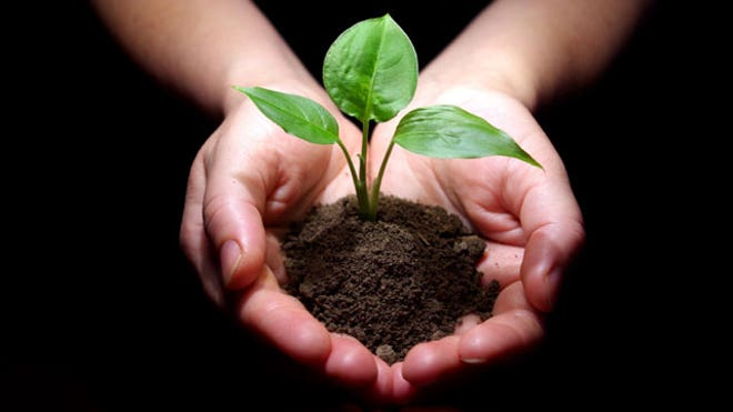 Hands-Hold-Small-Tree-Soil