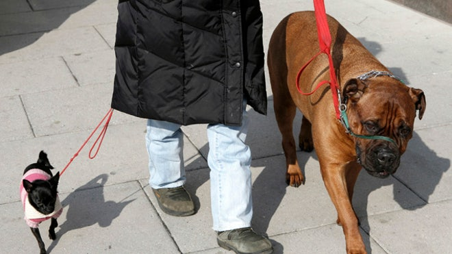 dogwalker1