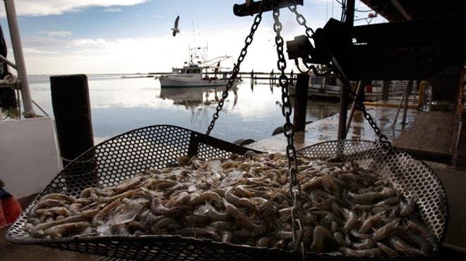 shrimp_gulf