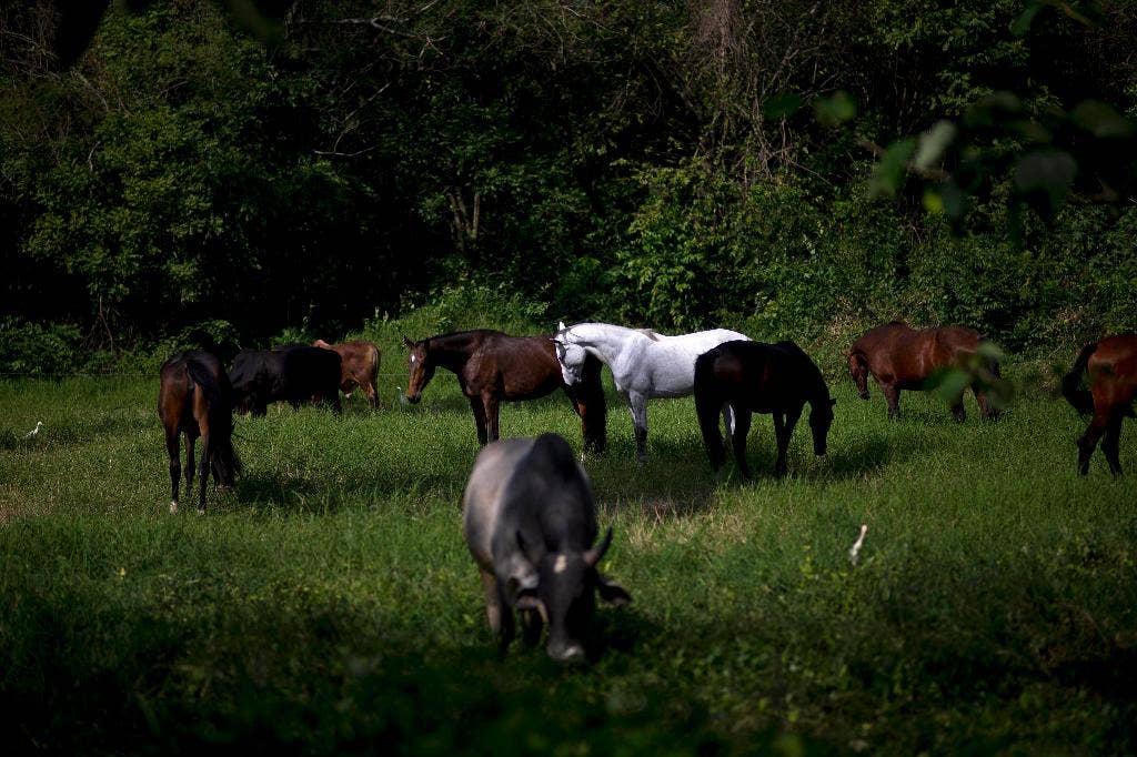 essay on horse breeding