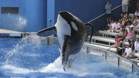 SeaWorld opted not to take to the Supreme Court an appeals ruling that prevents trainers from getting into pools with killer whales.