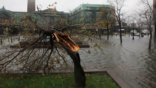 hurricane sandy tree reuters f