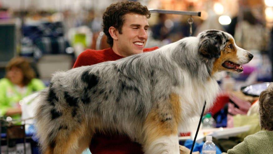 Adopting a dog in college