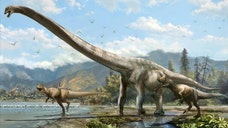 A new species of long-necked dinosaur was discovered by Canadian paleontologists from bones discovered in central China.