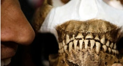 Human ancestor discovery