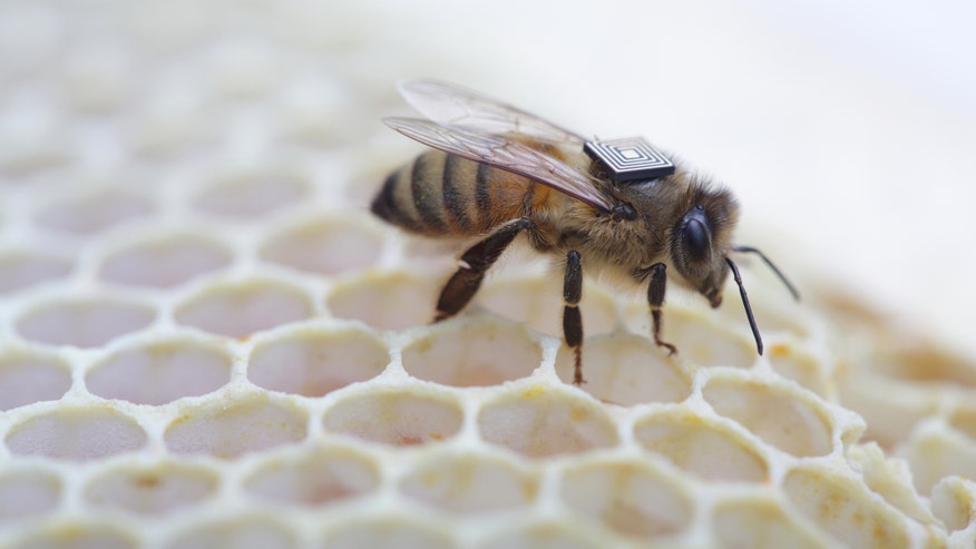 Researchers outfit honey bees with RFID 'backpacks' in global health study