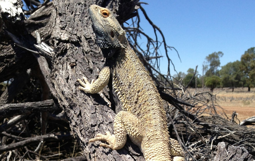lizardsexchange3.jpg