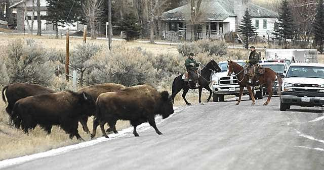 yellowstone national park jewish girl personals New year's in jackson hole: yellowstone & the grand tetons holidays celebrate the holidays in the wild west of jackson hole, wy with naturalists, explore the landscapes of yellowstone and.