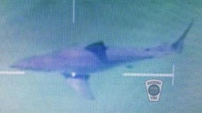 A beach in Duxbury, Mass. was closed for a couple of hours Monday afternoon after a Massachusetts State Police helicopter spotted a great white shark swimming near shore.