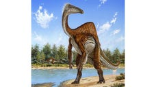 Nearly  years ago, scientists found bones of two large, powerful dinosaur arms in Mongolia and figured they had discovered a fearsome critter with killer claws. Now scientists have found the rest of the dinosaur and have new descriptions for it: goofy and weird.