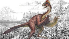 It's called the chicken from hell: a birdlike dinosaur some  feet tall that weighed around  pounds when it roamed western North America on its long, slender hind legs.