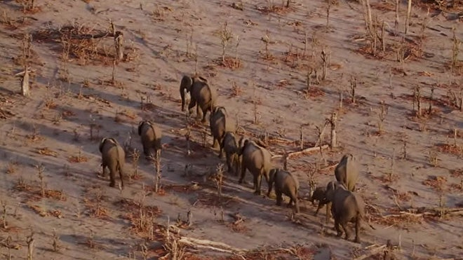 A combination of drone technology and complex math is the latest weapon in the battle against animal poaching.