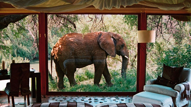 Share your breakfast with a giraffe, or lounge poolside with an elephant.