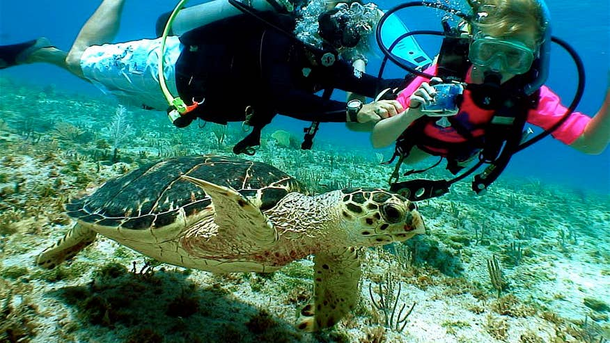 13 Family Friendly Dive Sites For Your Kids Fox News