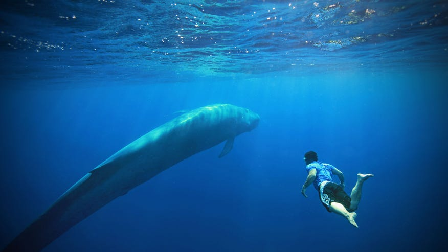 Swim with giant blue whales and promote their conservation