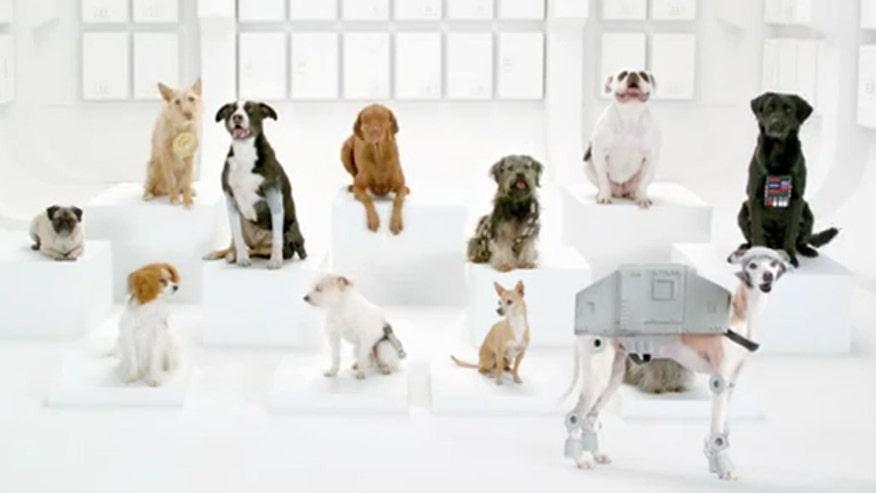 VW Dogs