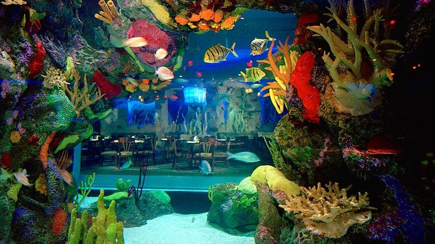 Amazing Underwater Restaurants And Bars Around The World