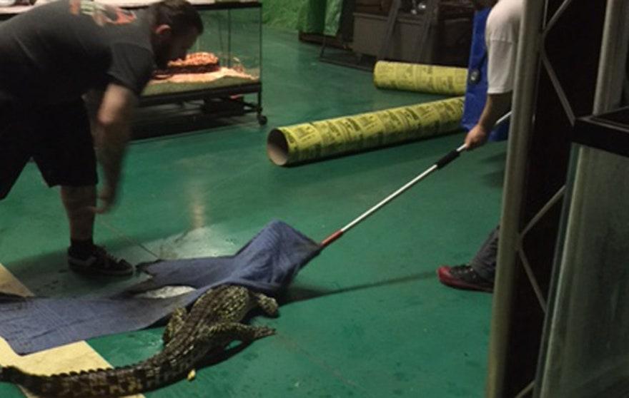 Gator4