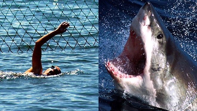 are sharks getting more dangerous shark week addresses