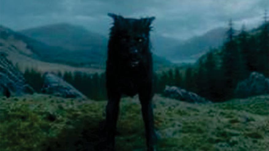 padfoot harry potter