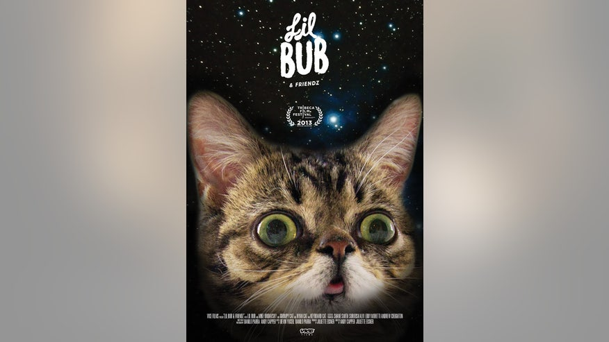 Lil Bub and Friends Grab 1.jpg