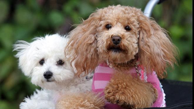 dogsdeportation.jpg