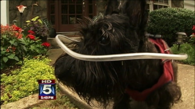 Halo Vest Helps Visually Impaired Dogs Fox News