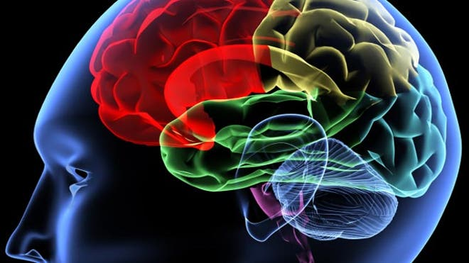 How to make a digital human brain