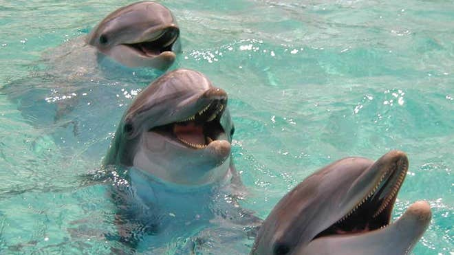 Dolphins help battle addictive behavior