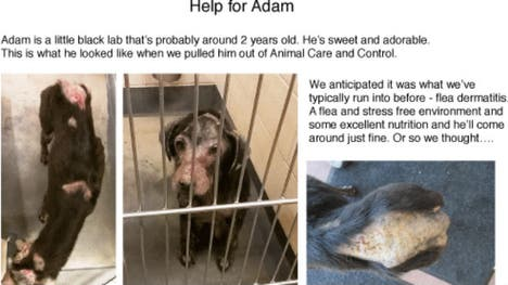 Adam the dog loves people, but he can't have much contact with them right now.