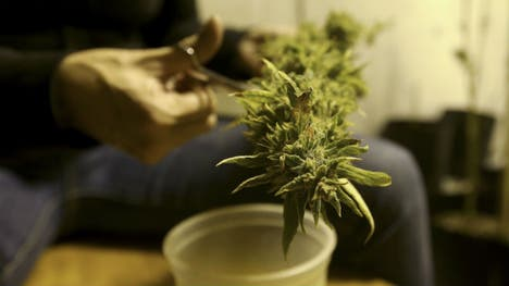 A German court ruled on Tuesday that some people suffering from chronic pain should be able to cultivate their own cannabis for therapeutic purposes.