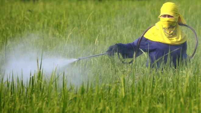 Pesticide_Reuters.jpg