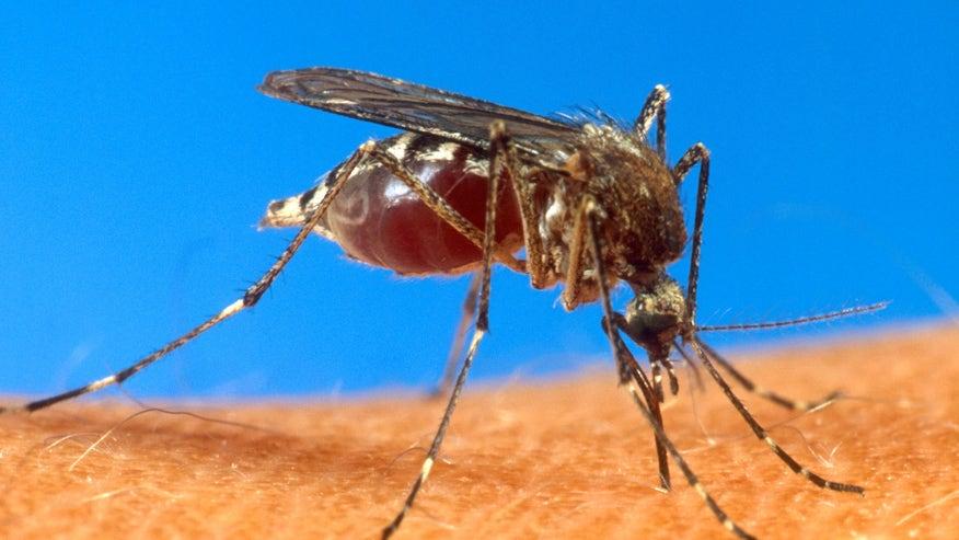 Mosquito-borne chikungunya virus spreading rapidly in Haiti